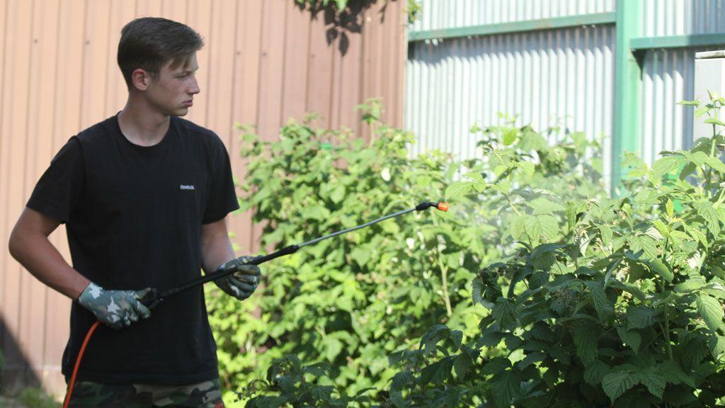 Обработка побегов раствором медного купороса при помощи садового распылителя
