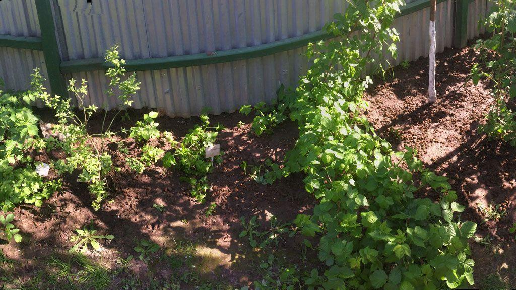 Подкормка органическим удобрением