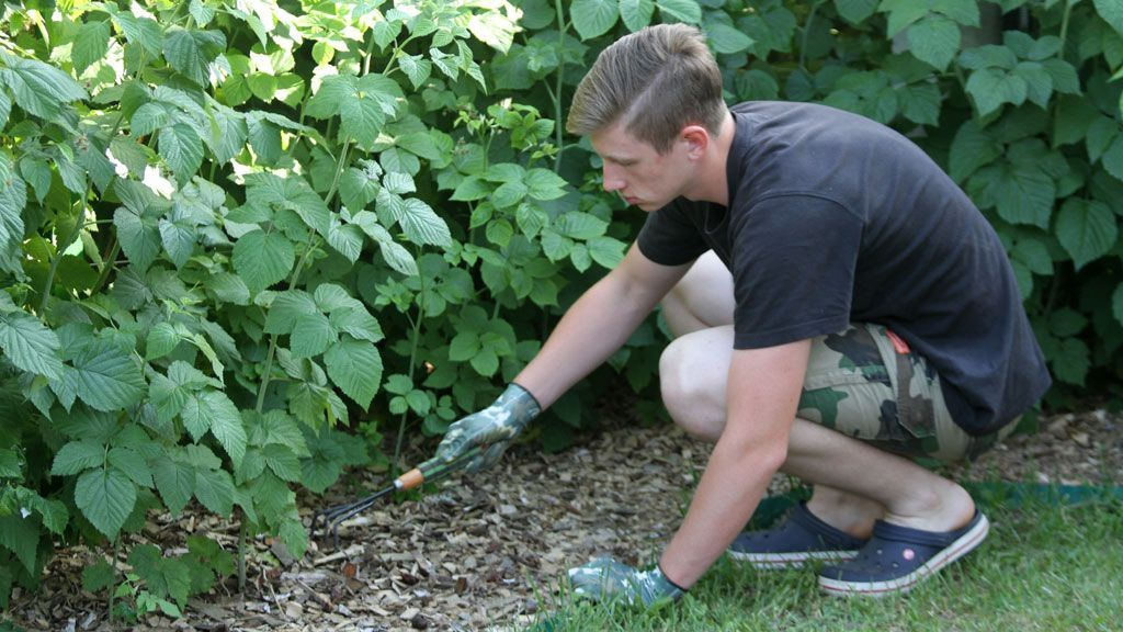 Рыхление земли садовыми граблями перед внесением минерального удобрения